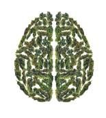 pot-brain